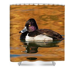Ring-necked Duck Shower Curtain