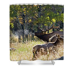 Shower Curtain featuring the photograph Rocky Mountain Bull Elk Bugeling by Nathan Bush