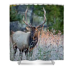 Shower Curtain featuring the photograph Rocky Mountain Wildlife Bull Elk Sunrise by Nathan Bush