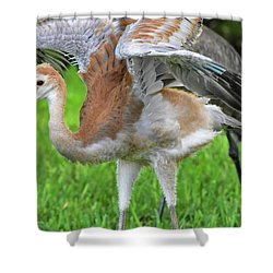 Sandy Crane Shows New Feathers Shower Curtain