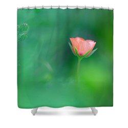 Scarlet Pimpernel Shower Curtain