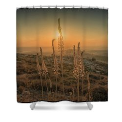 Sea Squills At Sunset Shower Curtain