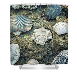 Sea Was My Home #1 Shower Curtain