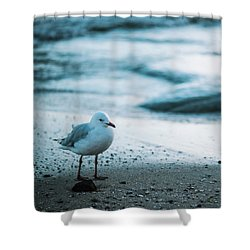 Shower Curtain featuring the photograph Seagull On The Beach. by Rob D
