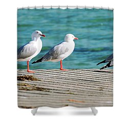 Shower Curtain featuring the photograph Seagulls On The Beach. by Rob D