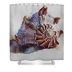 Seashell Swirl Shower Curtain