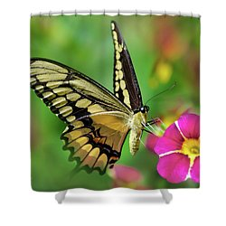 Shower Curtain featuring the photograph Second Nature Butterfly by Christina Rollo