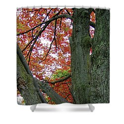 Seeing Autumn Shower Curtain
