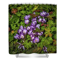 Shower Curtain featuring the photograph September Crocus #h9 by Leif Sohlman