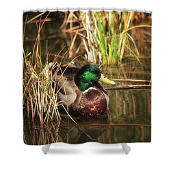 Shower Curtain featuring the photograph Serene by Rick Furmanek