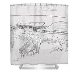 Sheep On Chatham Island, New Zealand Shower Curtain