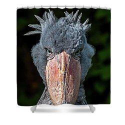 Shoe-billed Stork Shower Curtain