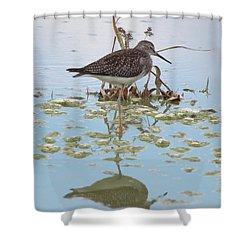 Shorebird Reflection Shower Curtain