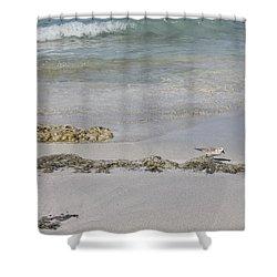 Shorebird Shower Curtain