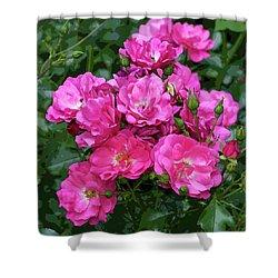 Shrub Rose Stylized Shower Curtain