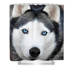 Shower Curtain featuring the painting Siberian Husky Mask A91818 by Mas Art Studio