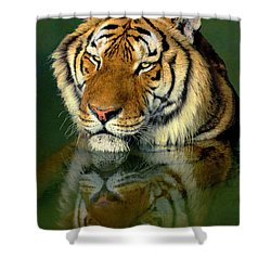 Shower Curtain featuring the photograph Siberian Tiger Reflection Wildlife Rescue by Dave Welling