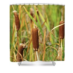 Signs Of Autumn #3 Shower Curtain