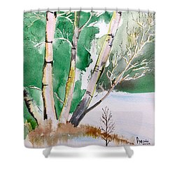 Silver Birch In Snow Shower Curtain