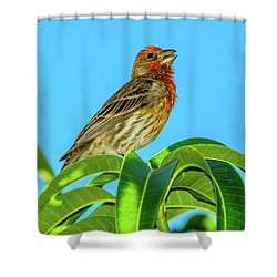 Singing House Finch Shower Curtain