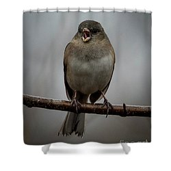 Singing Junco 2 Shower Curtain