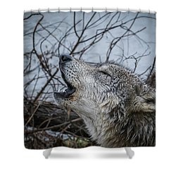 Singing The Song Of My People Shower Curtain