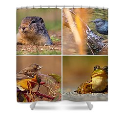 Small Animal Collage Shower Curtain