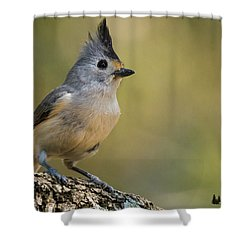 Small Titmouse Shower Curtain