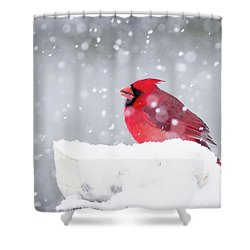Shower Curtain featuring the photograph Snowy Cardinal by Lori Coleman