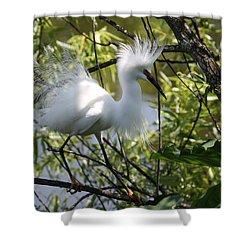 Snowy Egret 4031202 Shower Curtain