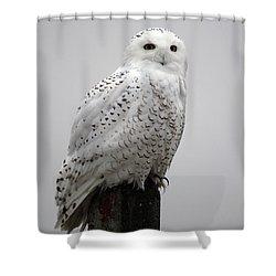 Snowy Owl In Fog Shower Curtain