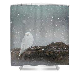Snowy Owl On A Ledge Shower Curtain
