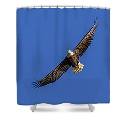 Shower Curtain featuring the photograph Soaring Eagle by Lori Coleman