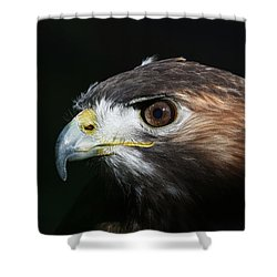 Sparkle In The Eye - Red-tailed Hawk Shower Curtain