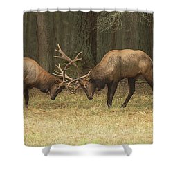 Sparring Shower Curtain