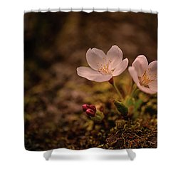 Spring Arrival In Seattle Shower Curtain
