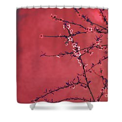 Spring Blossom Border Over Red Arty Textured Background. Chinese Shower Curtain
