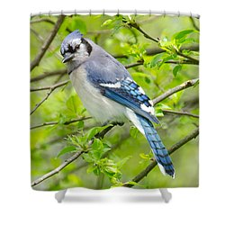 Springtime Bluejay Shower Curtain