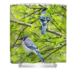 Springtime Pairs Shower Curtain