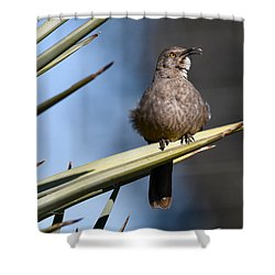 Squawker Shower Curtain