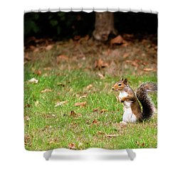 Shower Curtain featuring the photograph Squirrel Stood Up In Grass by Scott Lyons