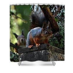 Squirrels Shower Curtain