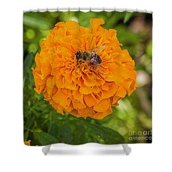 Shower Curtain featuring the photograph Stay Busy by Jon Burch Photography