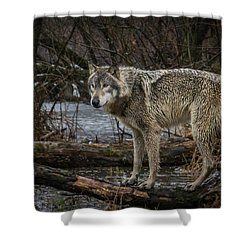 Stay Dry Shower Curtain