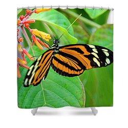Striking In Orange And Black Shower Curtain
