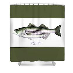 Striped Bass Shower Curtain