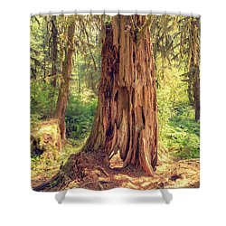 Stump In The Rainforest Shower Curtain