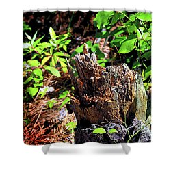 Shower Curtain featuring the photograph Stumped On Assateague Island by Bill Swartwout Fine Art Photography