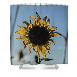 Summer Afternoon Shower Curtain