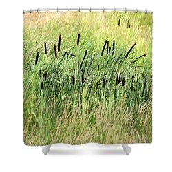 Summer Cattails In Field Of Grass - Shower Curtain